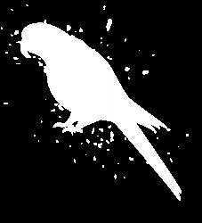 Parot M3acaw - Graphic Fashion T-shirt